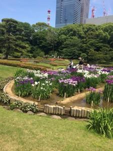 皇居の庭園と園芸種/森・ガ