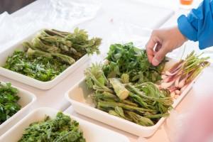 5月16日山菜の勉強会①の報告