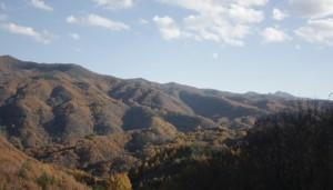 紅葉ピーク、森の秋祭り/森・ガ