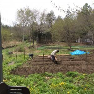 牛糞を使う/農園