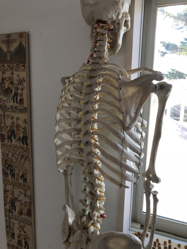 頚椎、胸椎、腰椎/自力整体